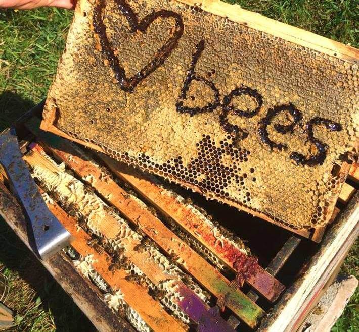 Summer of bees!