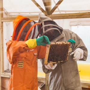 beekeeping experience day opportunity