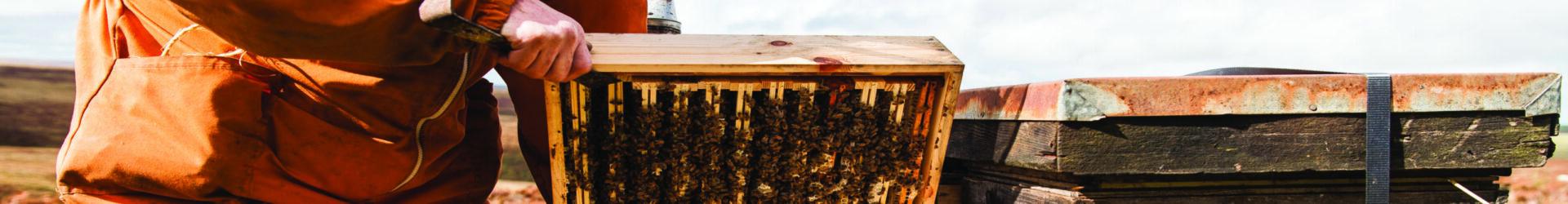 beekeeping demo