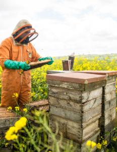 bee keeper