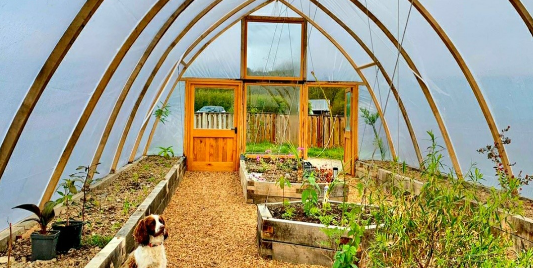 dog in greenhouse